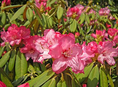 4月25日 赤城自然園 セゾンガーデンいろいろ_a0001354_22134110.jpg