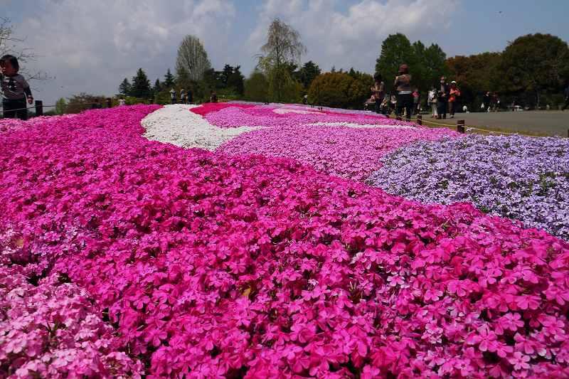 昭和記念公園の木々の緑が綺麗です_f0044056_1323439.jpg