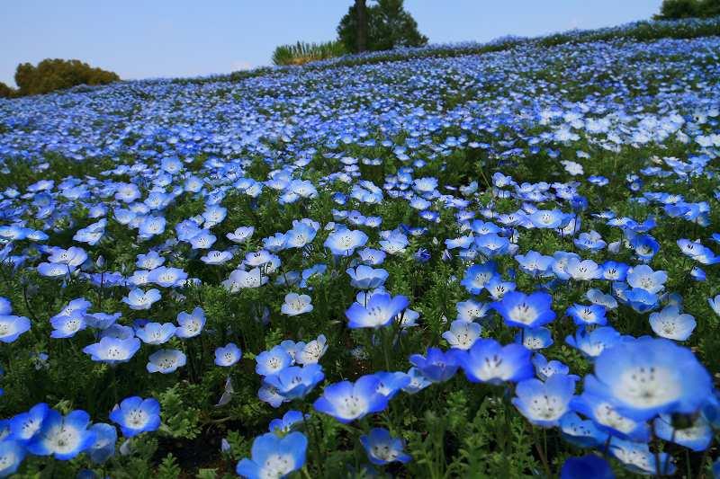 昭和記念公園の木々の緑が綺麗です_f0044056_13242528.jpg