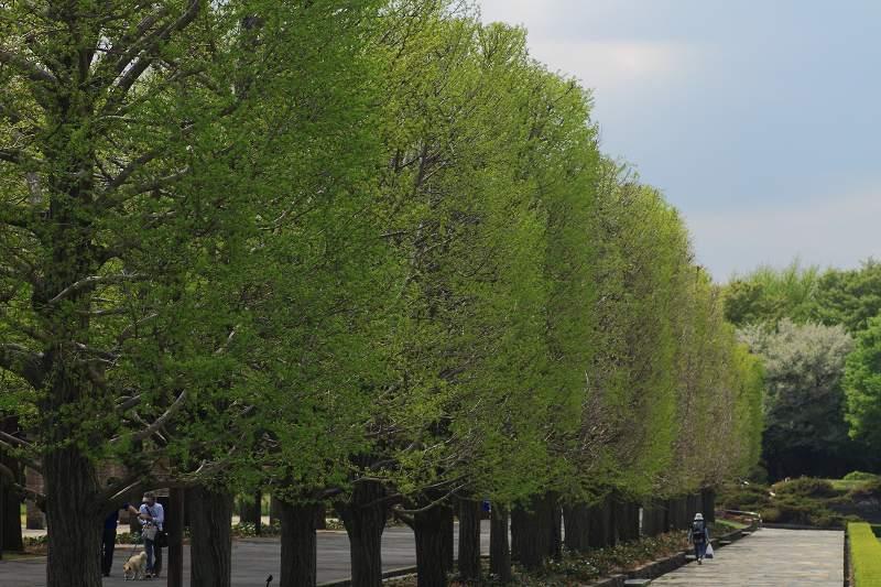 昭和記念公園の木々の緑が綺麗です_f0044056_8365254.jpg
