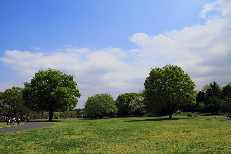 昭和記念公園の木々の緑が綺麗です_f0044056_8391354.jpg