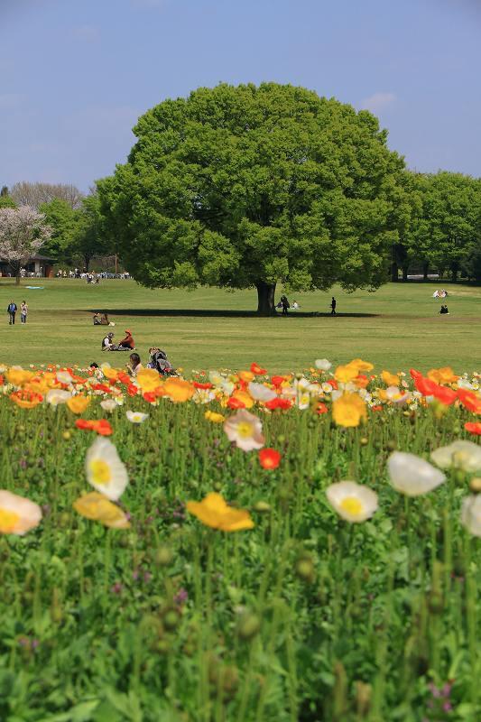 昭和記念公園の木々の緑が綺麗です_f0044056_8404398.jpg