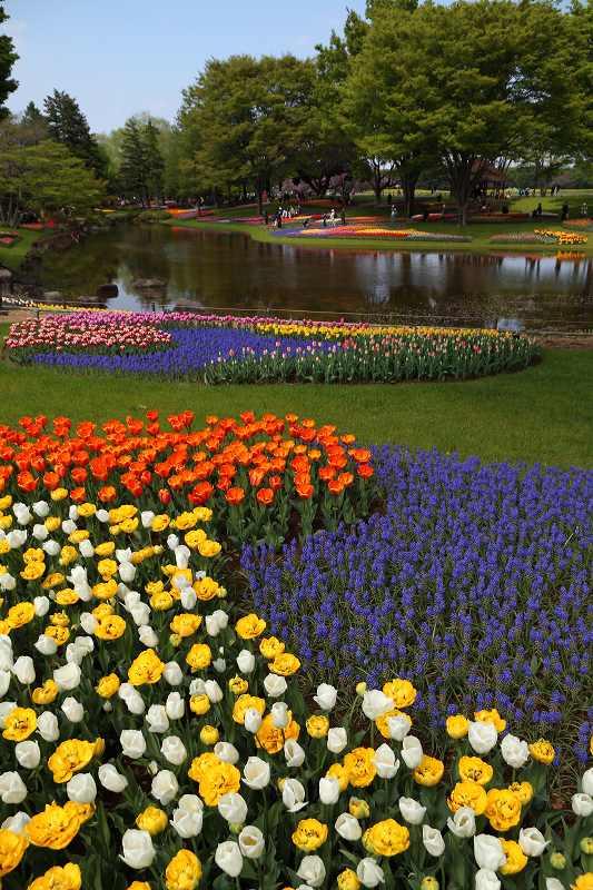 昭和記念公園の木々の緑が綺麗です_f0044056_8414835.jpg