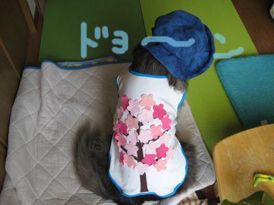 背中の桜3_a0119263_1761564.jpg