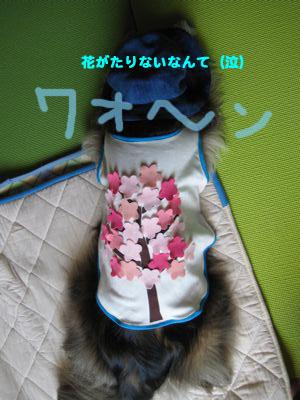 背中の桜3_a0119263_1774764.jpg