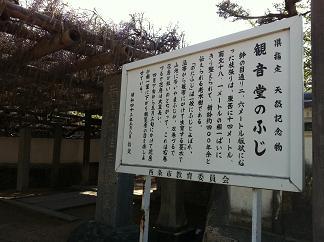 禎祥寺「観音堂のふじ」_e0197164_12374397.jpg