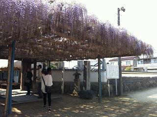 禎祥寺「観音堂のふじ」_e0197164_1240210.jpg