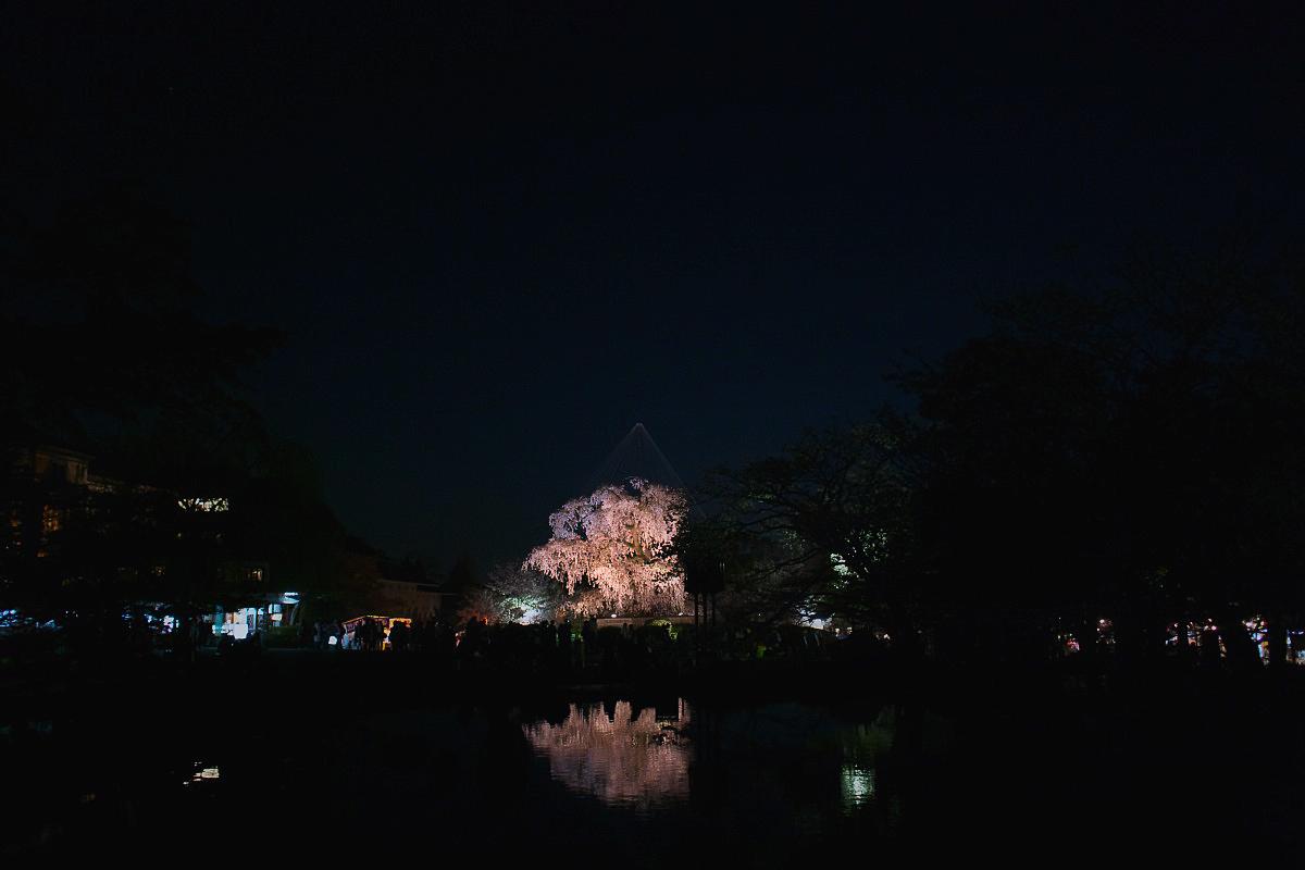 桜 2011 京都 <円山公園>_f0021869_2504341.jpg