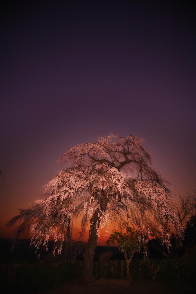 桜 2011 京都 <地蔵禅院>_f0021869_371266.jpg