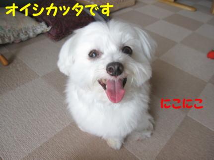 b0193480_1212772.jpg