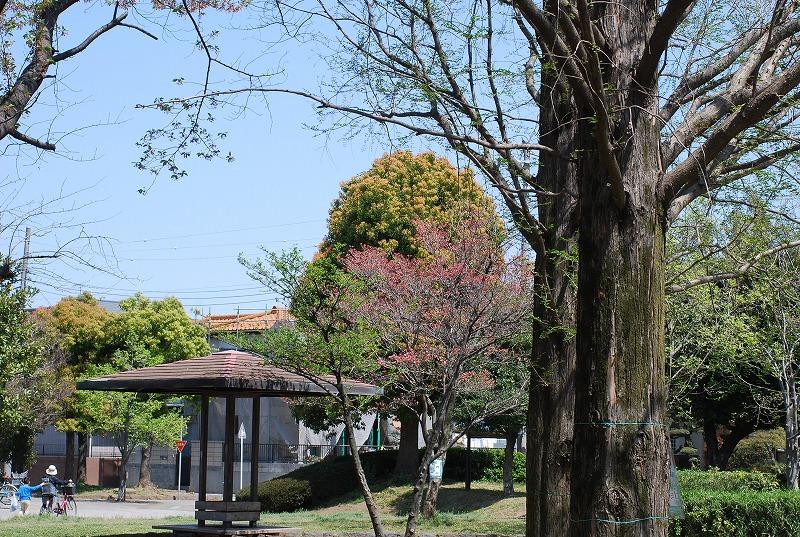 春の近所散策_c0187781_18203896.jpg