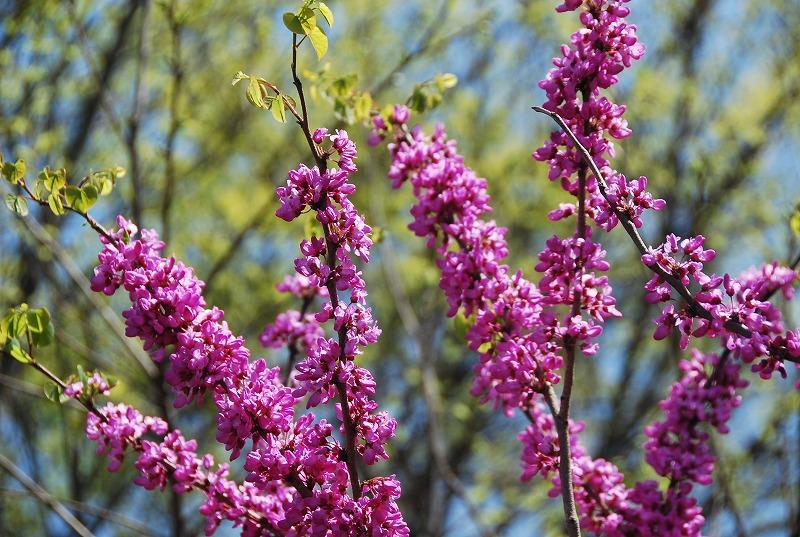 春の近所散策_c0187781_18214515.jpg