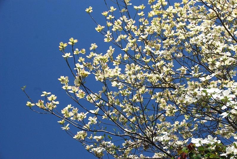 春の近所散策_c0187781_18221932.jpg