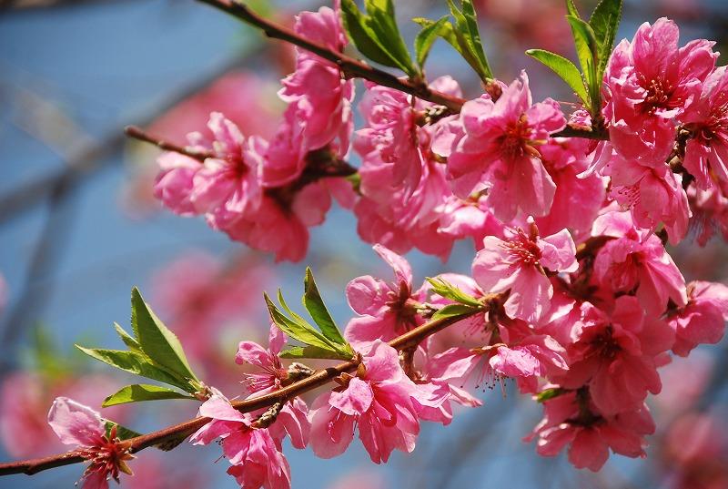 春の近所散策_c0187781_18224450.jpg