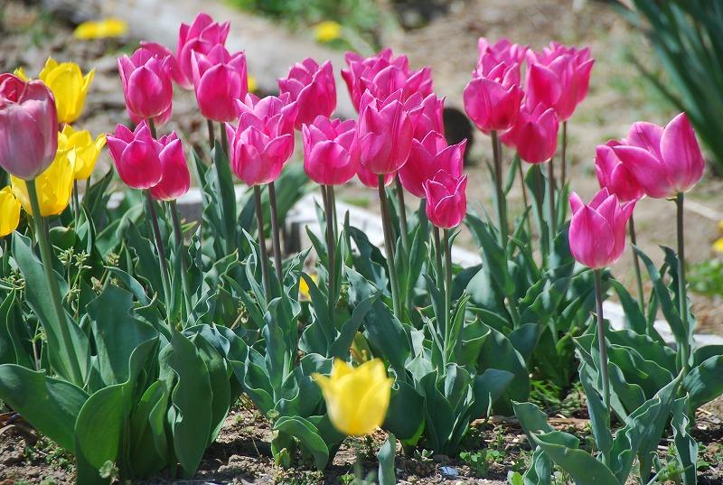 春の近所散策_c0187781_1823226.jpg