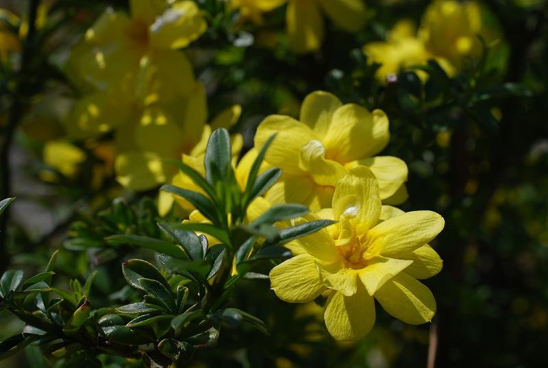 春の近所散策_c0187781_18295435.jpg