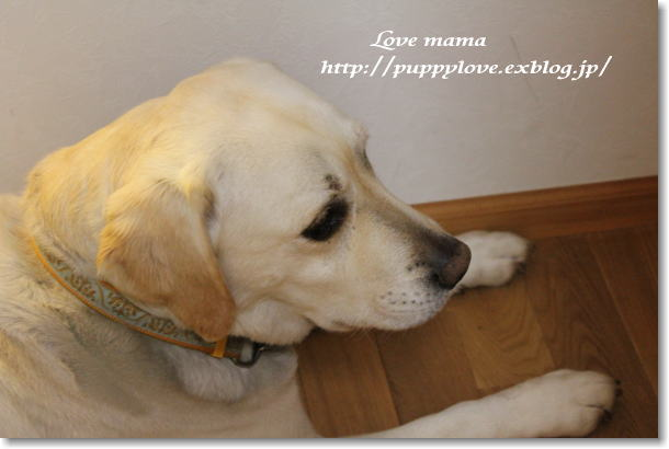 震災で保護された犬とマーガレットの健気な姿!!_b0136683_233107.jpg