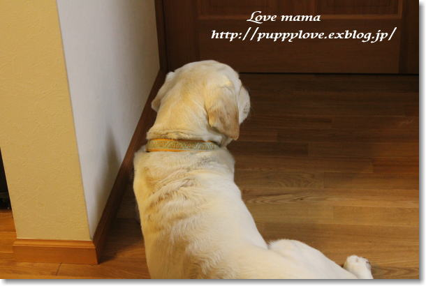 震災で保護された犬とマーガレットの健気な姿!!_b0136683_2332798.jpg