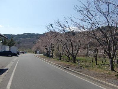 春よ来い!!_b0219993_10254327.jpg