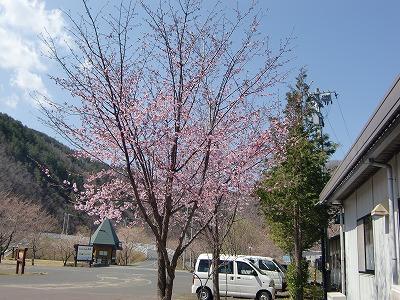 春よ来い!!_b0219993_10284886.jpg