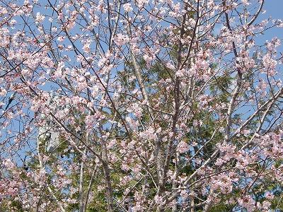 春よ来い!!_b0219993_10291026.jpg