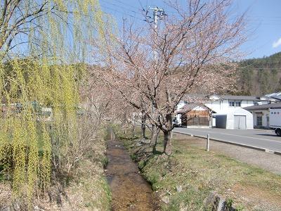 春よ来い!!_b0219993_10293731.jpg