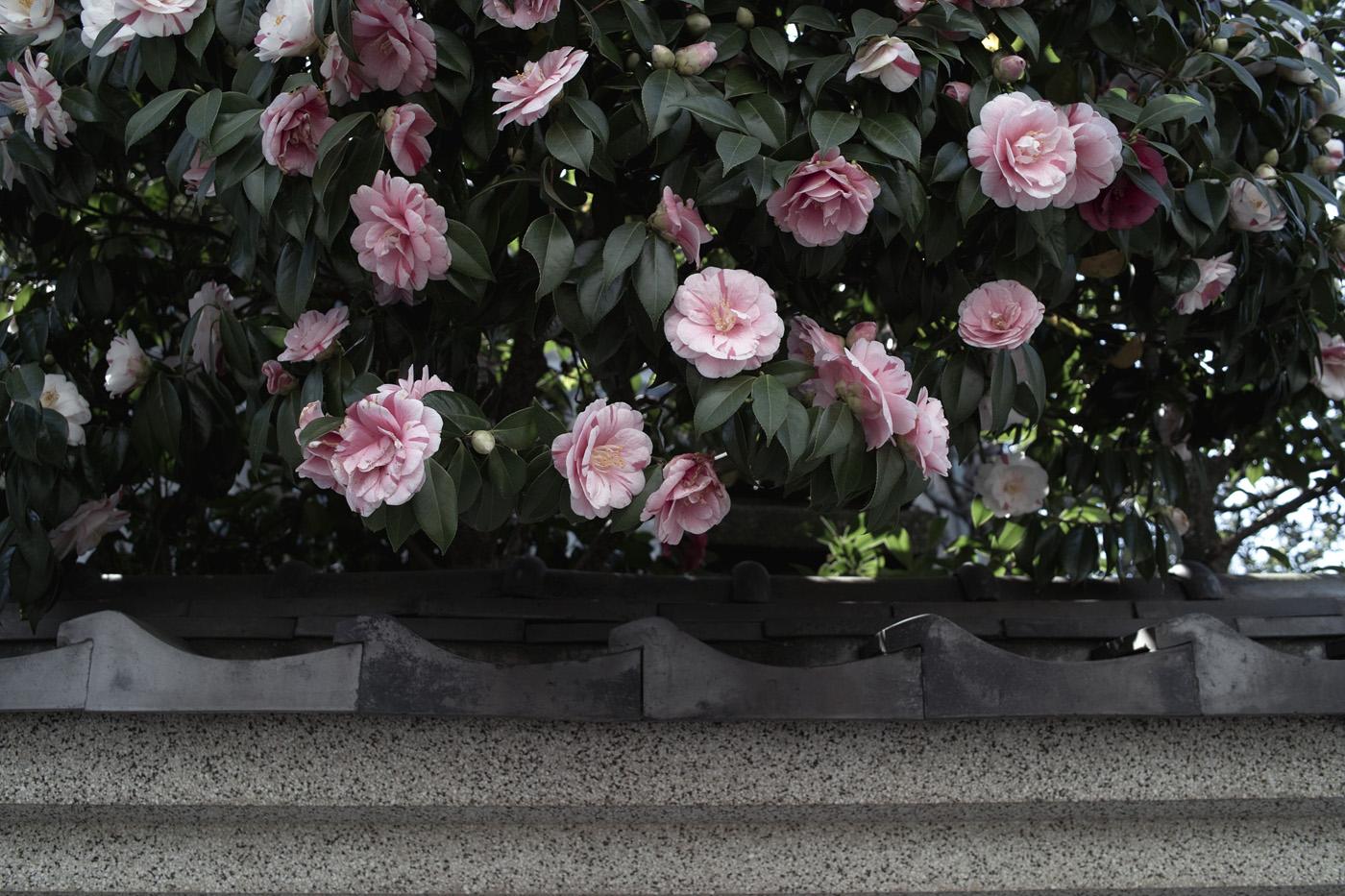 広尾の花、その12。_c0120903_2541551.jpg