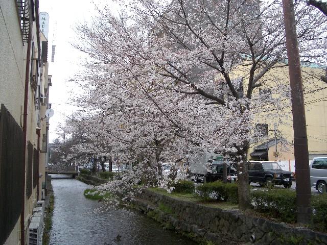 京都花見旅行4_a0047004_1212332.jpg
