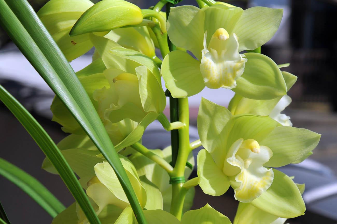 ランの花2011 壁紙写真_f0172619_122334.jpg