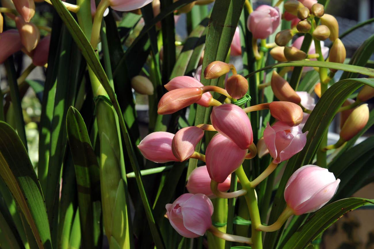 ランの花2011 壁紙写真_f0172619_1223553.jpg