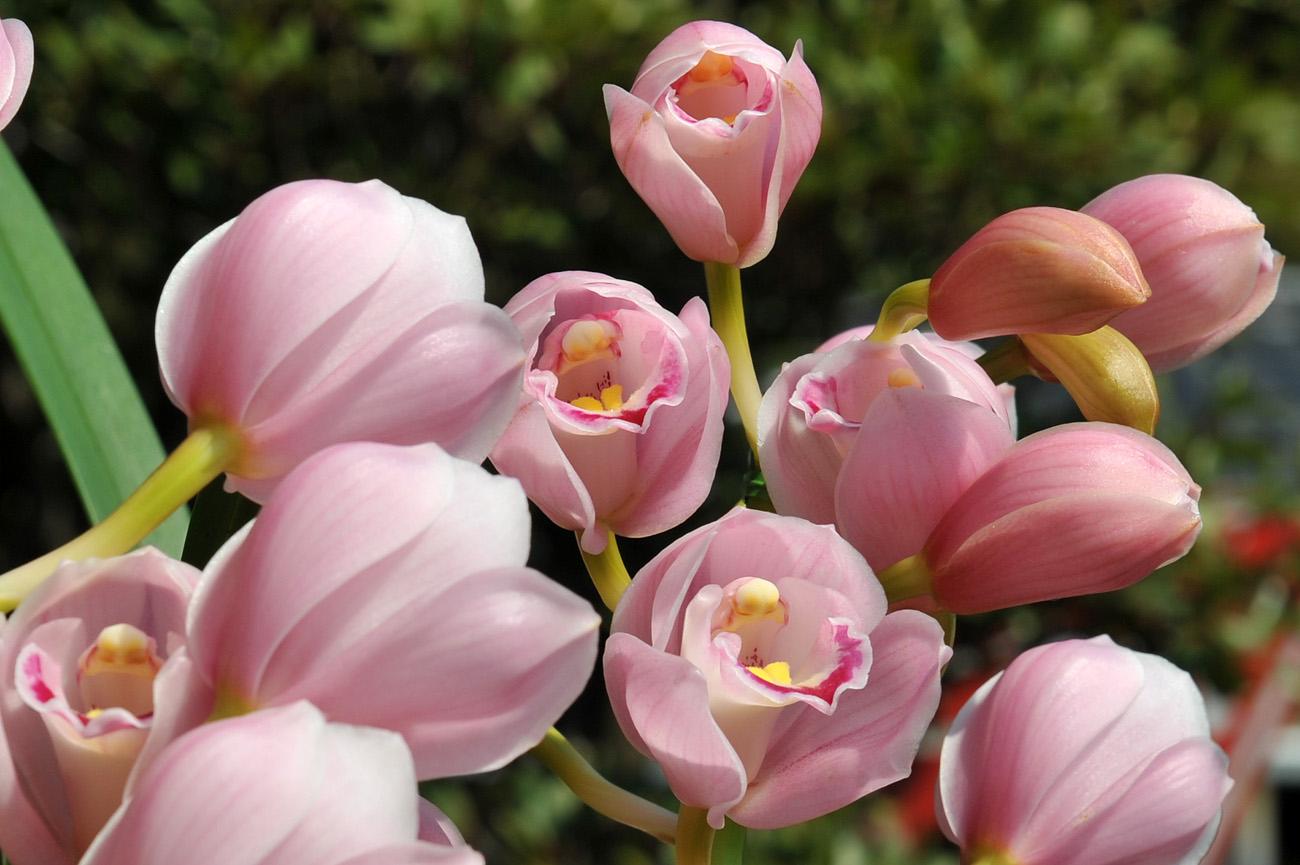 ランの花2011 壁紙写真_f0172619_1224881.jpg