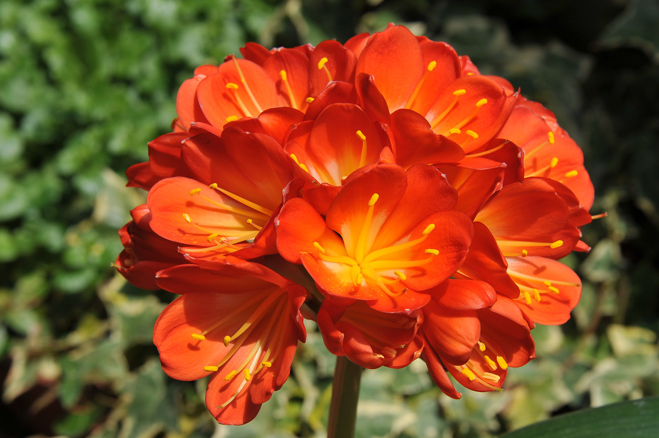 ランの花2011 壁紙写真_f0172619_1235667.jpg