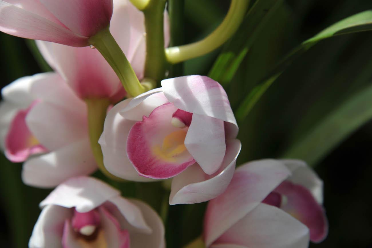ランの花2011 壁紙写真_f0172619_1241514.jpg
