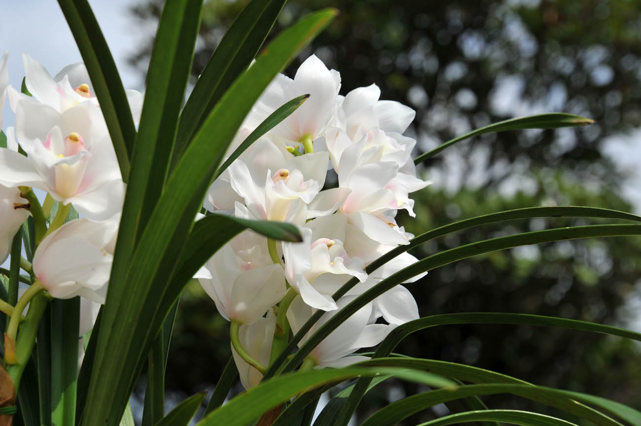 ランの花2011 壁紙写真_f0172619_1244531.jpg