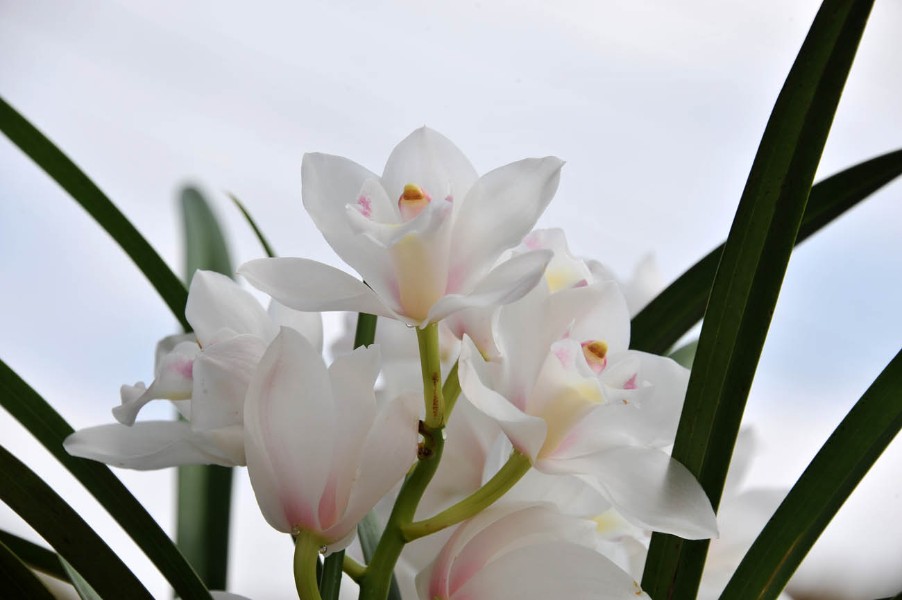 ランの花2011 壁紙写真_f0172619_1245656.jpg