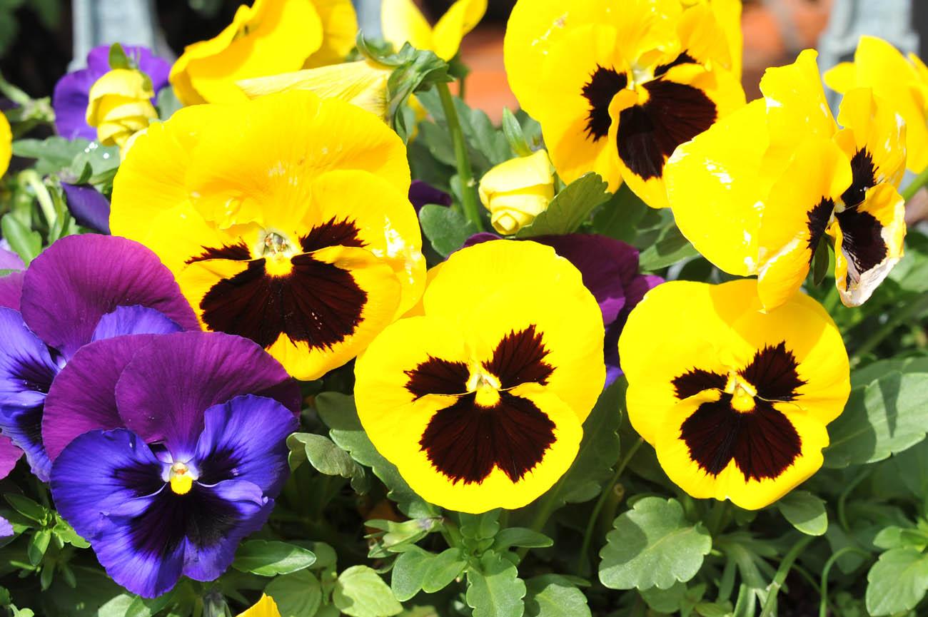 ランの花2011 壁紙写真_f0172619_1252297.jpg