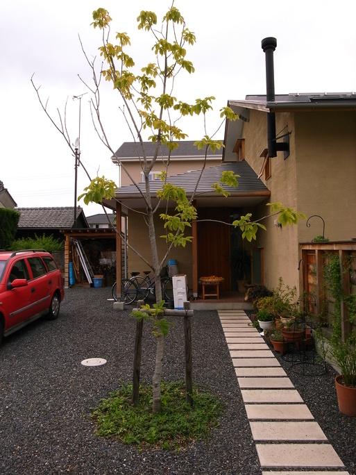 Nさんのいえ 植木の植替え 2011/4/26_a0039934_17363976.jpg