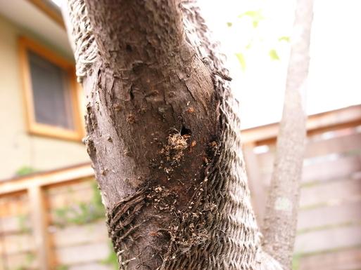 Nさんのいえ 植木の植替え 2011/4/26_a0039934_1738151.jpg