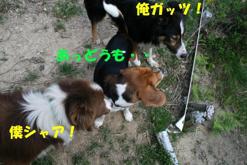 d0077740_20141363.jpg