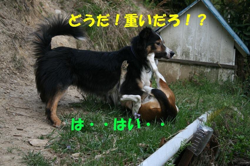 d0077740_20175464.jpg