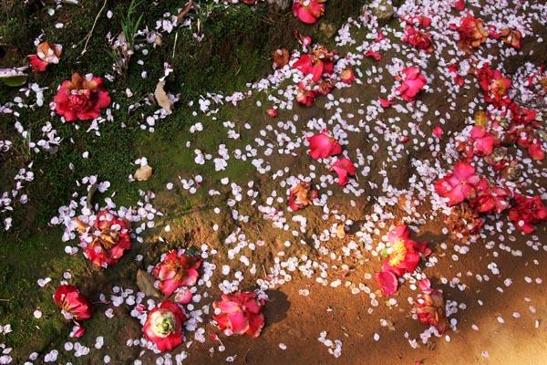 春にまみれて_f0159642_20223614.jpg