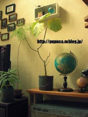 b0159756_13453999.jpg