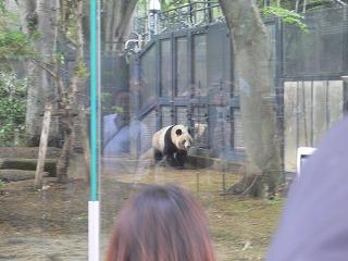 上野ツアー。動物園編_d0137764_11551313.jpg