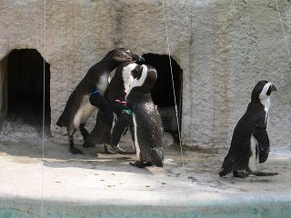 上野ツアー。動物園編_d0137764_17415484.jpg