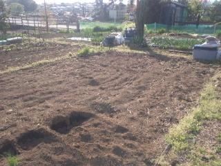家庭菜園を始めました!_e0159969_1913112.jpg