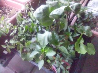 家庭菜園を始めました!_e0159969_19143023.jpg