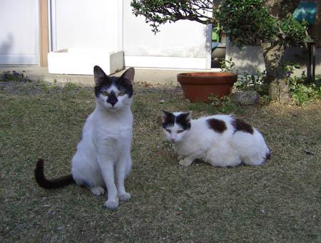 猫ブログ_d0000995_18365625.jpg