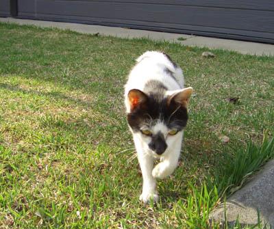 猫ブログ_d0000995_18391625.jpg