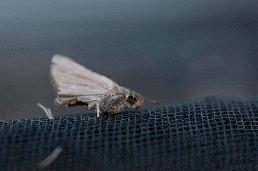 私設昆虫記-143 生と死の差分_f0215695_10315270.jpg
