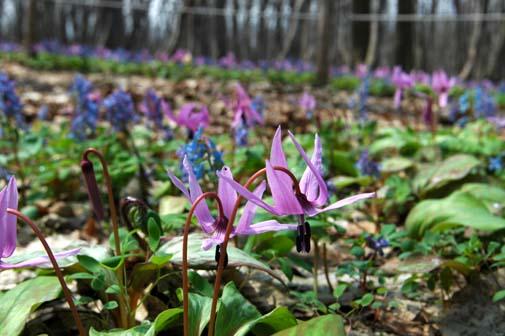 春のフラワートレッキング♪_f0096216_19595396.jpg